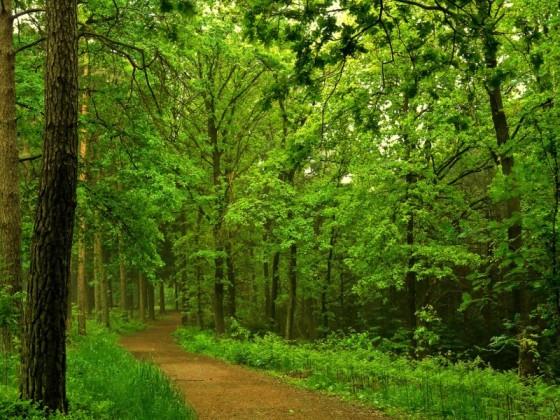 paisajes-de-bosques-030